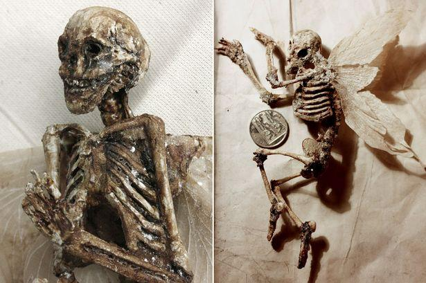Mystery of winged tiny 'human skeletons' found in 'basement of old London house'