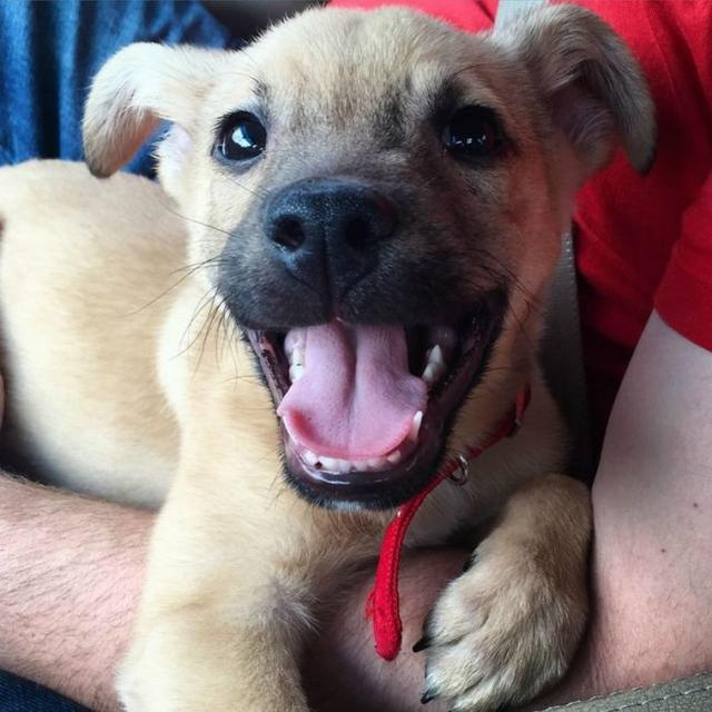 31 Shelter Dogs Who Are Really, Really Excited About Being Adopted