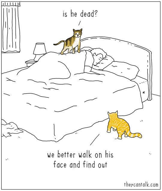 What Cats Are Really Saying When They Meow, As Told In Comics