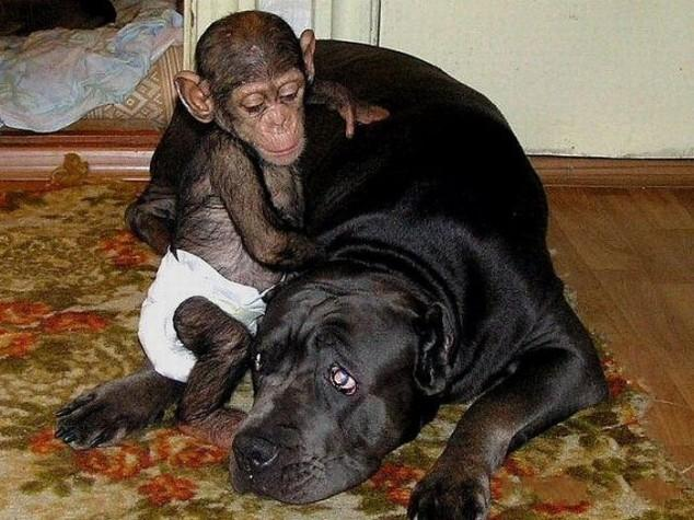 Devoted Mama Dog Raises An Orphaned Baby Chimp As One Of Her Own