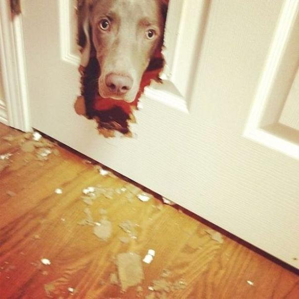 22 Mischievous Pups That Prove That Dogs Can Be Real Jerks Sometimes