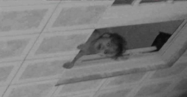 Suposta imagem de criança em foto intriga internautas. Afinal tem uma criança ou não? 80% das pessoas não veem ela.
