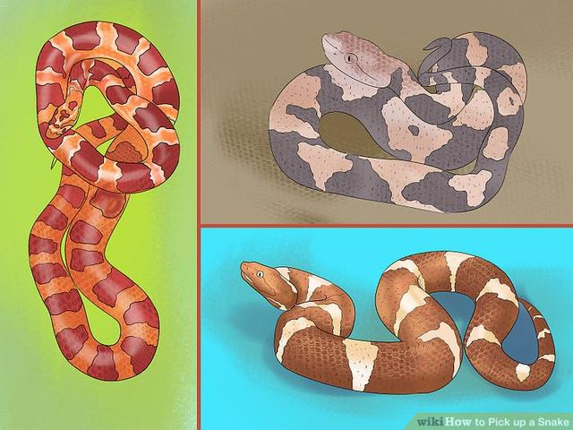 7d7e366fb890 wikiHow to Pick up a Snake 国际 蛋蛋赞