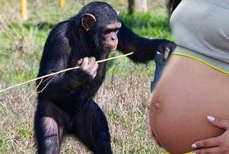Garota engravida de chimpanzé e revoluciona a ciência!!!