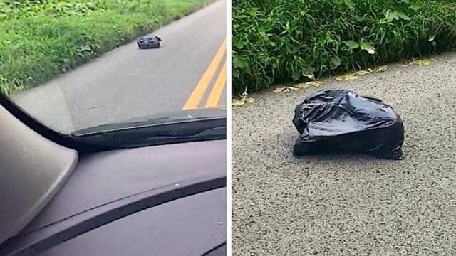 Mulher nota um saco de lixo andante e ao se aproximar o que estava ali mudou sua vida