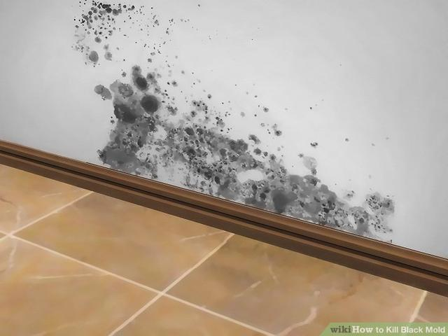 Taking Safety Precautions Wiki Black Mold