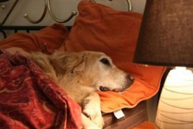 Man Wants To Bring His Dog To His Room. The Hotel Owner's Response? Just Wonderful.
