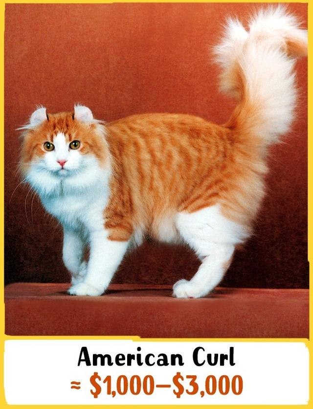 33e890d4dc 19 Awesome Cats That Cost a Fortune 国际 蛋蛋赞