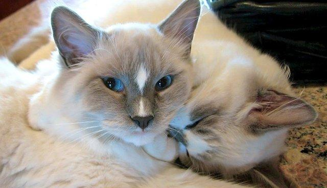 6 Things Cats Do That Show They Love You