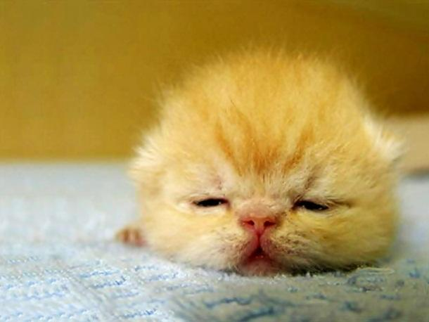 Here Are The 15 Cutest Things That's Ever Happened. I Can't Get Over #9.