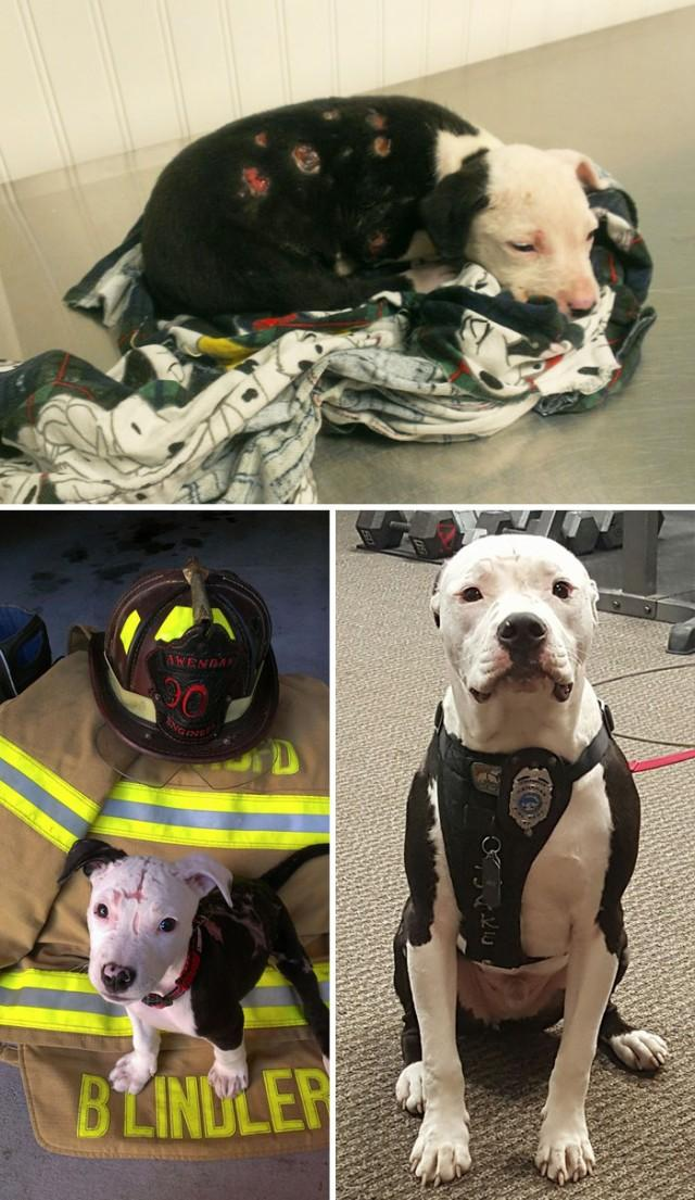 16 Unbelievable Before & After Rescue Dog Transformations