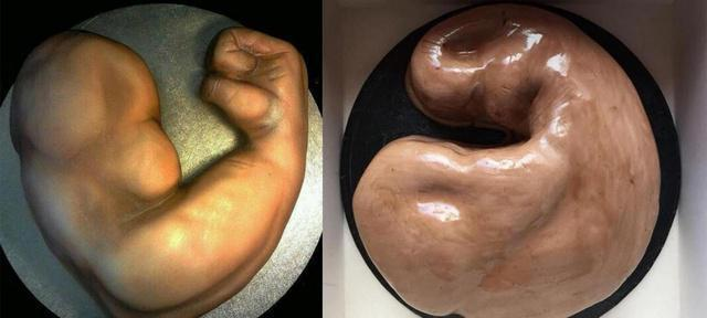 Woman orders bicep cake for her boyfriend, but doesn't quite get what she ordered