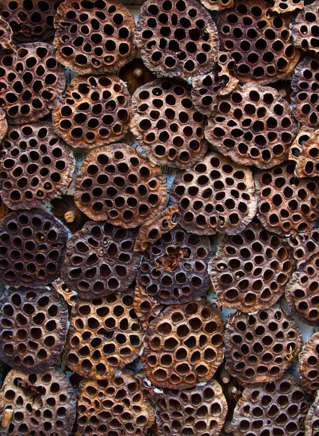 HOLY MOLEY! What is trypophobia and what causes a fear of ...