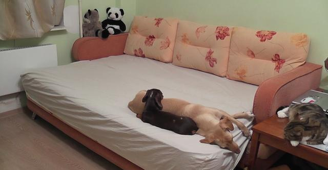 Dad Sets Up A Camera And Figures Out What His Pets Really Do When He's Gone