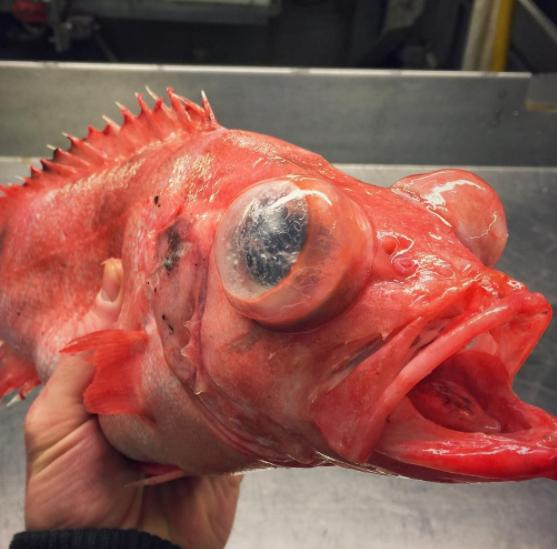 The Things That This Fisherman Finds In The Deep Sea Are Absolutely Terrifying