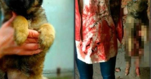 Sadistic Teens Who Tortured Animals Have Finally Learned Their Fate – Sent To Russian Prison