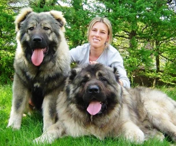 25 Of The World's Largest Dog Breeds You'd Wish You Own_国际_蛋蛋赞