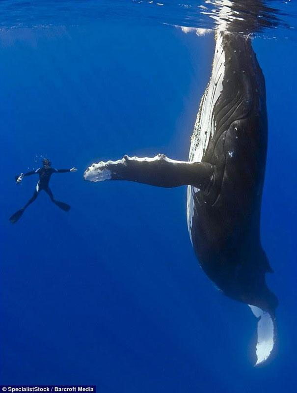 The 20 Most Perfectly Timed Photos… Still Can't Believe My Eyes, #9 is Awesome