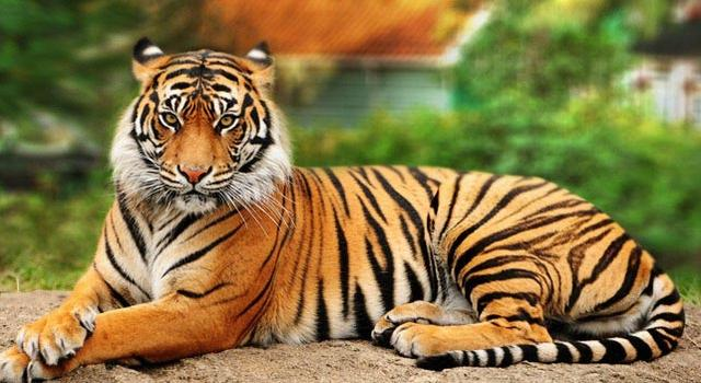 Top 10 Strongest Animals In The World_国际_蛋蛋赞