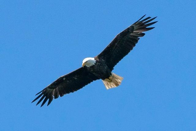 Philadelphia Eagles Vs Jacksonville Jaguars Live Thread And Information The Phinsider