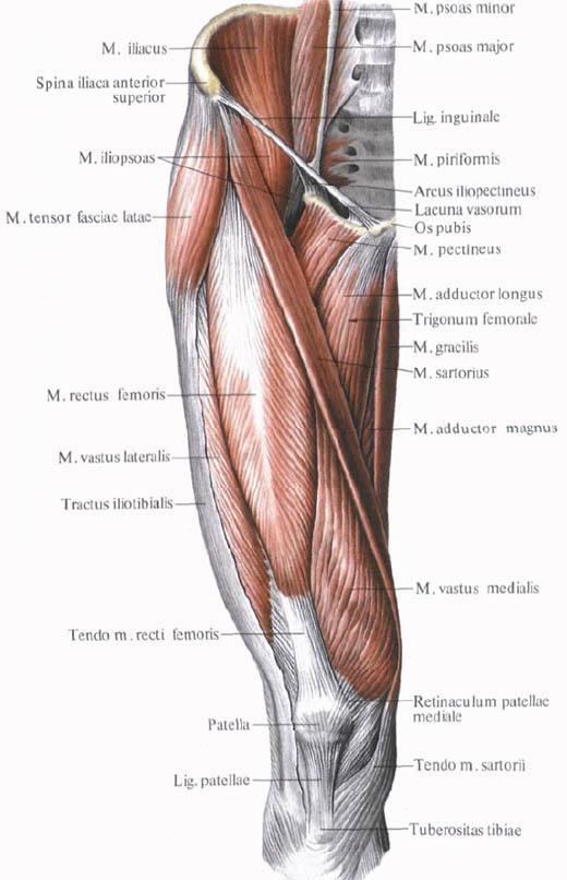 Anatomy Of Yoga How To Stretch Rigid Quadriceps