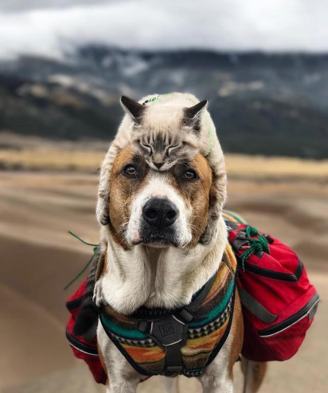 this cat and dog love travelling together and their
