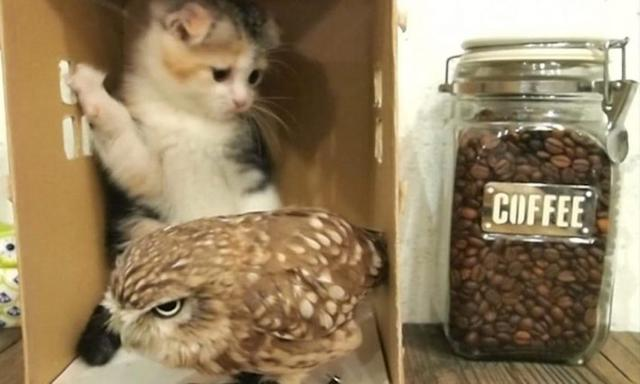 Kitten And Baby Owl Meet For The First Time And Their Next Move Is Too Much For Words