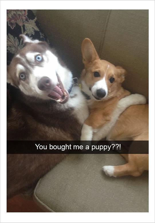 10 Funny Dog Memes