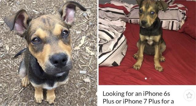 Mettono annuncio su Facebook per scambiare il cucciolo per un Iphone