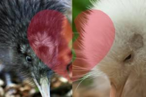 Turua the kiwi lucky to be alive after arranged marriage goes badly wrong