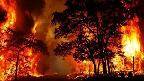 At least 9 killed in TN forest fire, many trapped