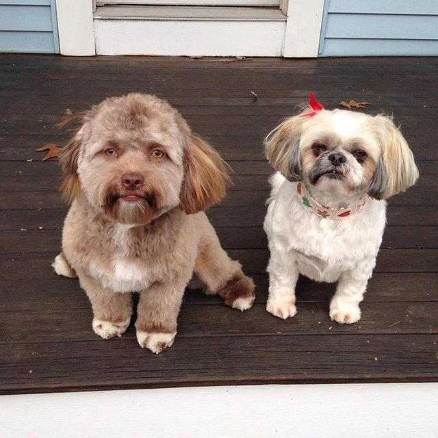 A dog with a human face has led network users into horror