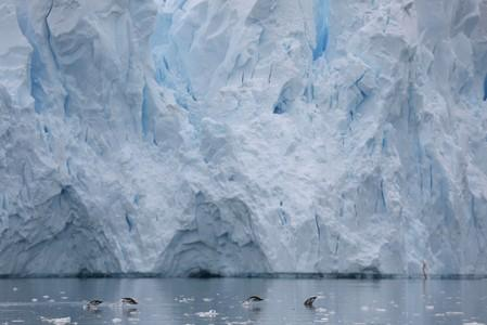 Journey to Antarctica - seals, penguins and glacial beauty