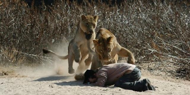 Pastor de igreja evangélica é atacado por leões após tentar provar que Deus interviria