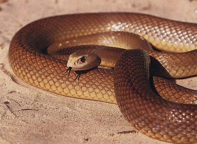10 Most Dangerous Snakes in the World_国际_蛋蛋赞