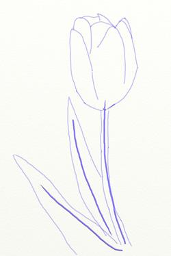 how to draw a tulip 国际 蛋蛋赞