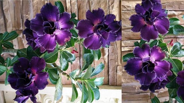 Essa Planta Produz A Flor Mais Linda Do Mundo