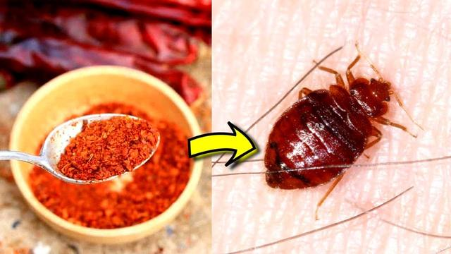 Top 4 Ways To Get Rid Of Bed Bugs Yourself At Home With Natural And