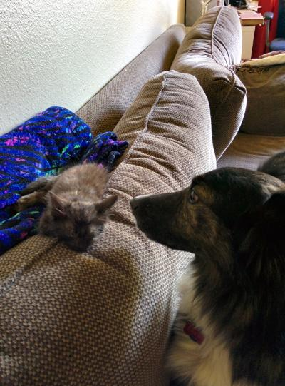 They Decided to Foster a Tiny Kitten but Didn't Expect the Family Dog to Become Obsessed!