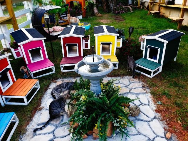 """We Created A Sanctuary For Abandoned And Stray Cats Called """"Catville"""""""