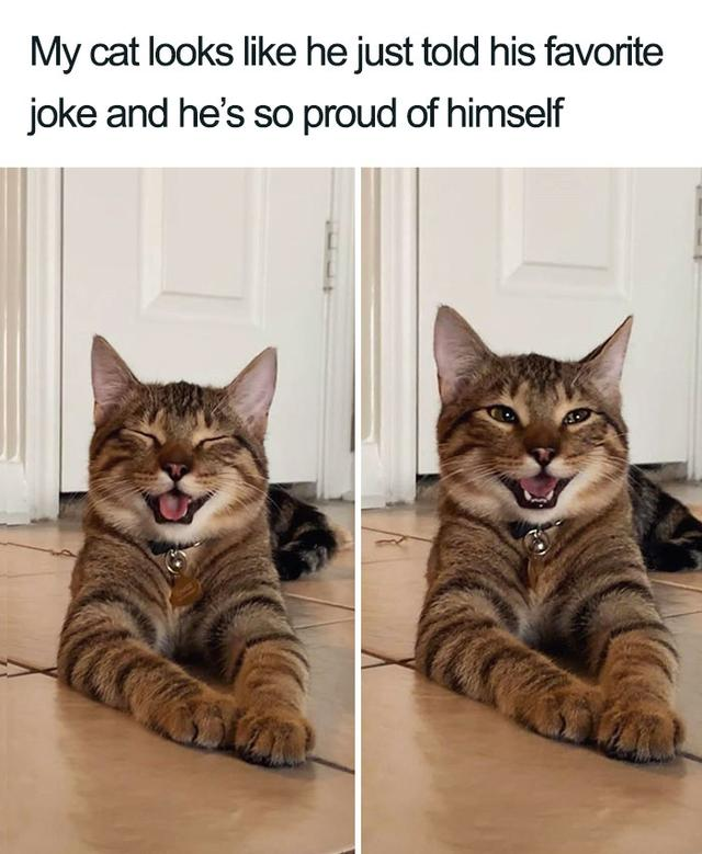 Smiling Cat Goes Viral And Becomes A Meme For 'Dad Jokes'