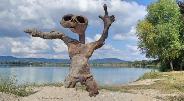 The Reincarnation Of Driftwood