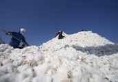 ICE cotton marks biggest weekly decline in nine months