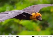 At least 9 people have been killed in the southern Kerala state of Nipah virus