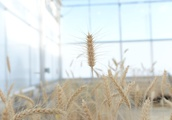 Gene-editing startups ignite the next 'Frankenfood' fight