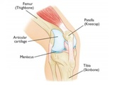 Do You Have Pain in Knees, Take a Look at the Causes and Treatments!