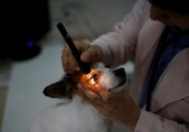 Drug-addicted pet owners may abuse their animals to secure opioid fix, study warns US vets