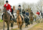 Fox hunts are merging to survive as experts say that the future of the tradition will push different