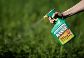 Exclusive: U.S. seed sellers push for limits on Monsanto, BASF weed killer