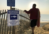 Cape Cod beaches: Playgrounds for tourists, and young sharks